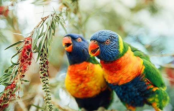 Mareeba Bird Watching
